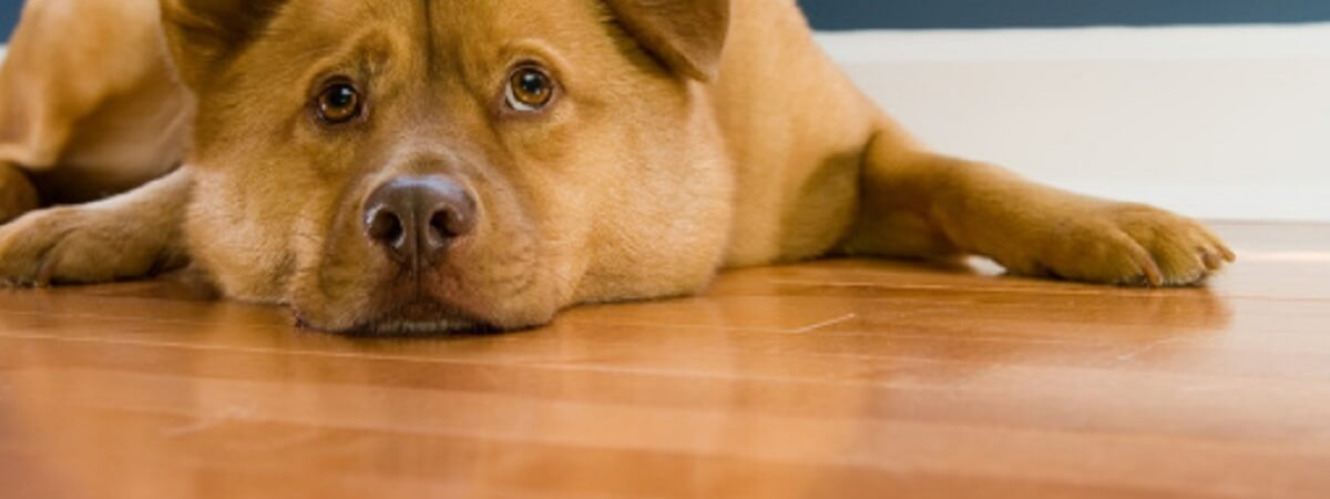 HOW CAN I PROTECT MY HARDWOOD FLOORING FROM PETS?